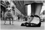 Elliott_Erwitt_Photo_Dog_New_York_City_1946